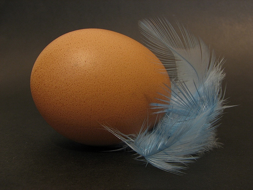 Egg & feathers