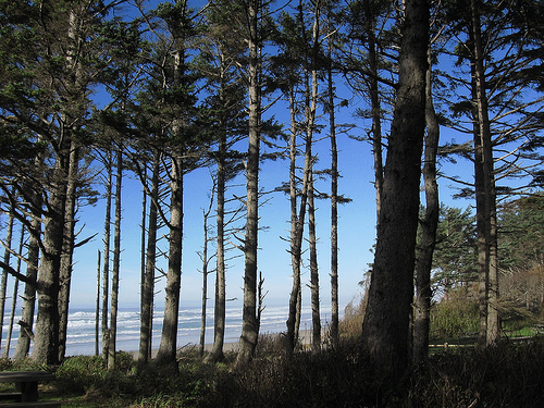 Sky through trees on the Oregon coast