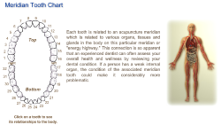 interactive tooth meridian chart